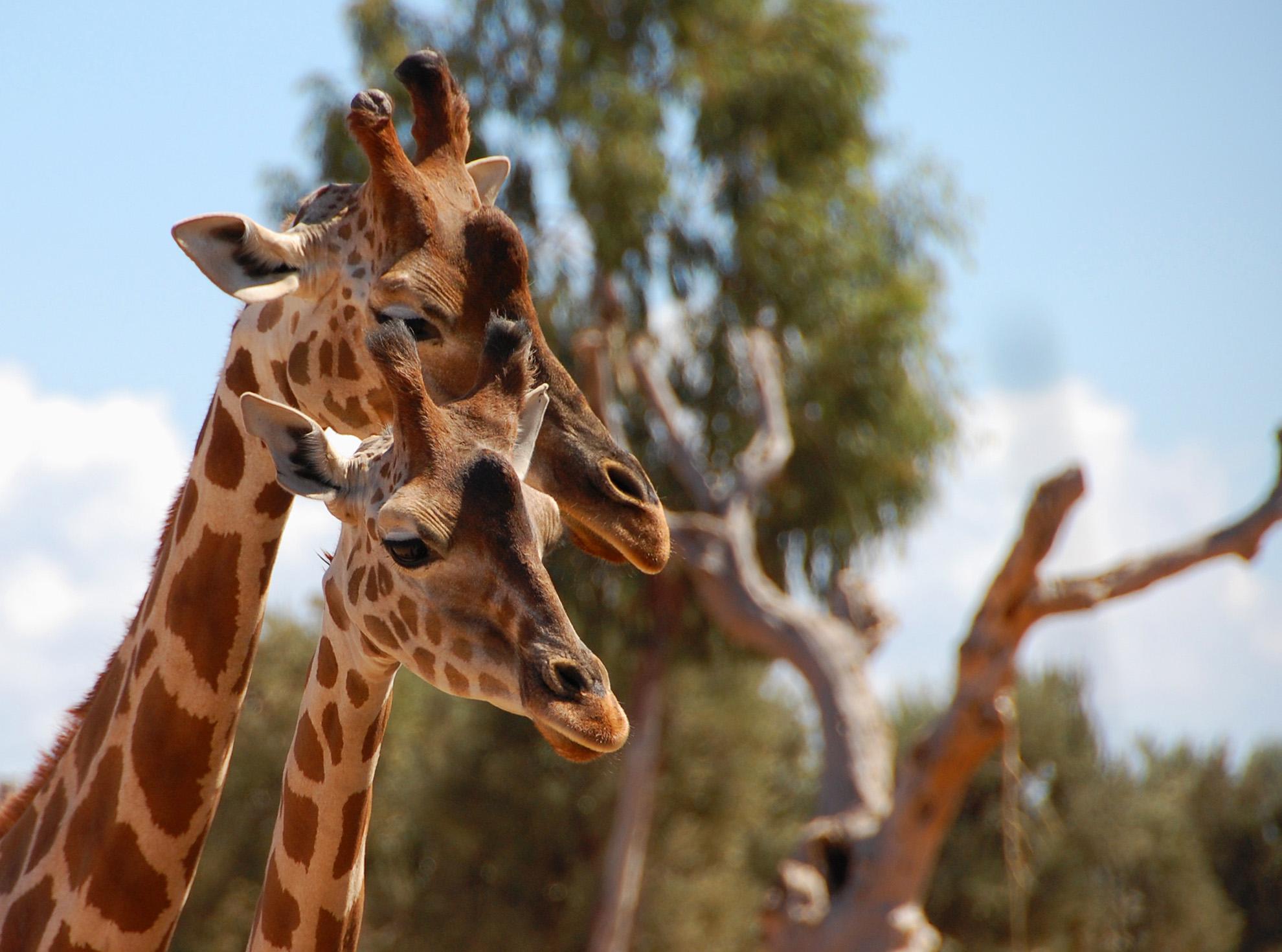 9_Zoo
